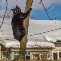 Мартовский кот :: Андрей Дворников