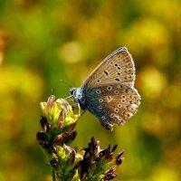 опять про бабочек 2 :: Александр Прокудин