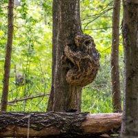 Деревянный мишка :: Владимир Лазарев