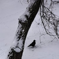Зимняя картинка :: Владимир Кроливец