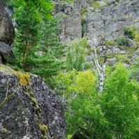 Мхи, камни, деревья... :: Ольга Чистякова