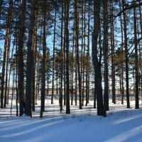 Зимний лес Ярослвская область :: Anton Сараев