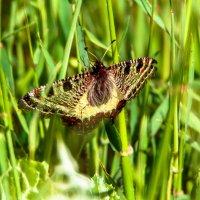 горная бабочка :: Адик Гольдфарб