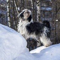 царица горы :: Лариса Батурова