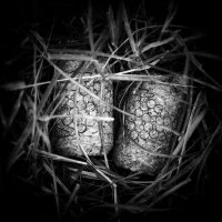nest :: Андрей Пигалов