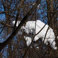 Медведь прилег на ветках отдохнуть. :: Владимир Безбородов