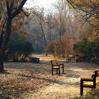 ... В саду опустевшем тропа далеко видна ... :: barsuk lesnoi