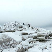 На берегу Финского залива :: Виталий