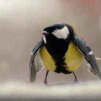 Я ужас, летящий на крыльях ночи! :: Олег Шендерюк