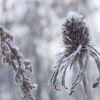Зимнии цветы :: Руслан