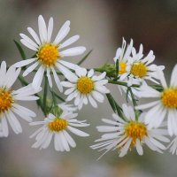 Осенние цветы! :: Светлана Масленникова