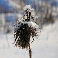 Картинка уходящей зимы :: Милешкин Владимир Алексеевич