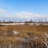 Замерзшие камышевые озёра :: Милешкин Владимир Алексеевич