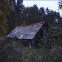 Сомово (Рамонский район) 1 :: Максим Минаков