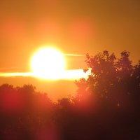 Закатное солнышко :: Светлана