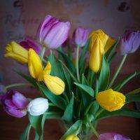 Весеннее ... змееподобные тюльпаны :: Евгения Кирильченко