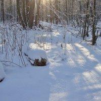 Снежная фантазия :: Лидия (naum.lidiya)