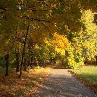 Осень в парке городском :: Татьяна Георгиевна