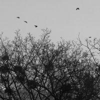 Птицы :: Ирина Сивовол