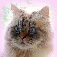Портрет кота Тихона :: Сергей Карачин