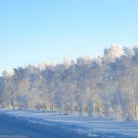 Зимние кружева 2 :: Светлана