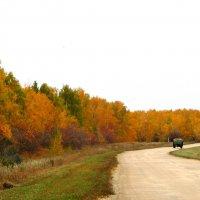 Любимая дорога осенью :: Светлана