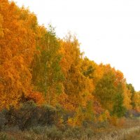 Осенняя палитра :: Светлана