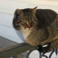 Монастырский кот :: Сергей Кочнев