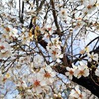 Весна пришла по календарю :: Mir-Tash