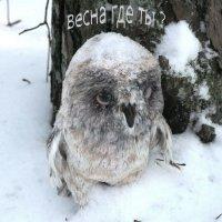 Ждём весну :: Александр Михайлов
