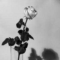 Свет и тень :: Lеsя Sеmейкинa