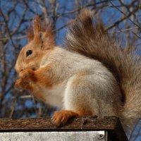 А я все сижу, да орешки все грызу!.... :: Лидия Бараблина