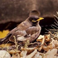 птичка :: Ирина Масальская
