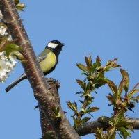 Весна любит пение птиц, весна - это счастья начало... :: Татьяна Смоляниченко