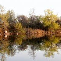 Весеннее обновление природы :: Лидия Бараблина