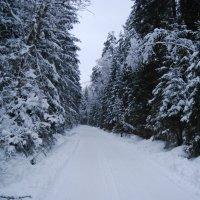 Зима :: Вера (makivera)