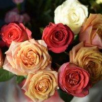 цветы :: Ксения Жильникова