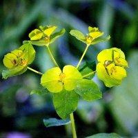 Лесной цветок :: Аркадий Басович