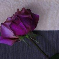 Роза :: Мария Емельянова