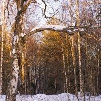Золото заката :: Юлия Воробьева