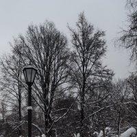наконец-то...зима :: Галина R...