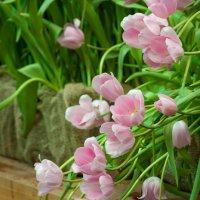 Нежные тюльпаны :: GALINA