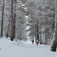 Январская прогулка :: Татьяна Соловьева