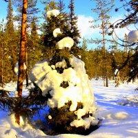Солнечный денёк..в лесу.. :: Галина Полина