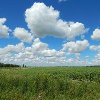 Облака над полем :: Валентина Пирогова