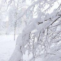 Снег этой зимы :: Игорь