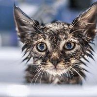 -Не любишь мыться?...Тогда мы идём к вам! :: Лилия .