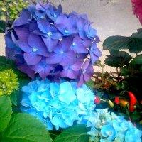 Цветы в нашем дворе. :: Елена Бушуева
