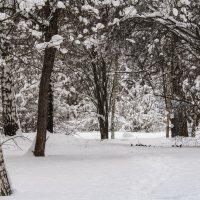 Старый сад. :: Владимир Безбородов