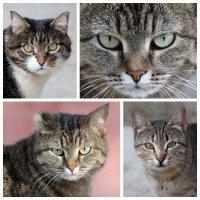 Серьёзные кошки :: Dr. Olver ( ОлегЪ )
